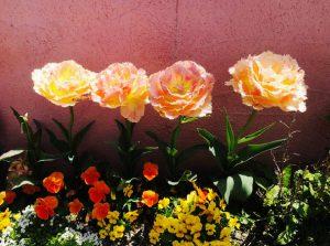 その季節にしか見られない花々を植えて います。
